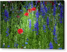Acrylic Print featuring the photograph Poppies And Wildflowers by Mark Duehmig