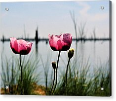 Poppies On Lake Mulwala 2 Acrylic Print
