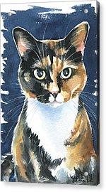 Poppy Calico Cat Painting Acrylic Print