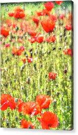 Poppy Meadow Art Acrylic Print