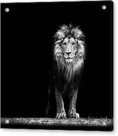 Portrait Of A Beautiful Lion, In The Acrylic Print by Baranov E