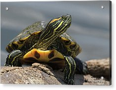 Portrait Of A Turtle Acrylic Print