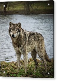 Posing By The Water Acrylic Print