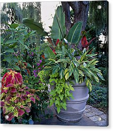 Potted Plants Including Bird Of Acrylic Print by Richard Felber