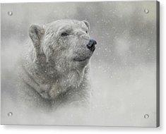 Prince Of The North Pole Acrylic Print