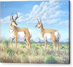 Pronghorn By The Tetons Acrylic Print