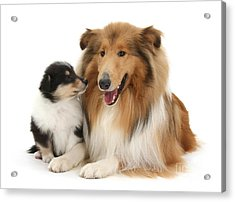 Acrylic Print featuring the photograph Proud Mother And Pup by Warren Photographic