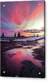 Puddle Reflection / Columbia Falls, Montana  Acrylic Print