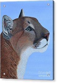 Puma Acrylic Print