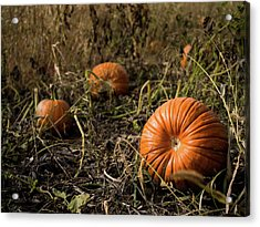 Acrylic Print featuring the photograph Pumkin's Resting by Whitney Leigh Carlson