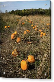 Acrylic Print featuring the photograph Pumpkin Patch by Whitney Leigh Carlson