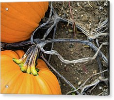 Acrylic Print featuring the photograph Pumpkins Entwined Together by Whitney Leigh Carlson