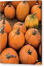 Acrylic Print featuring the photograph Pumpkins Of Different Shapes by Whitney Leigh Carlson