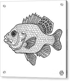 Pumpkinseed Fish Acrylic Print