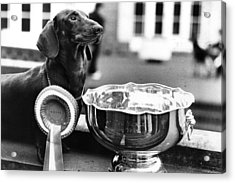 Pup Of The Year Acrylic Print by Evening Standard