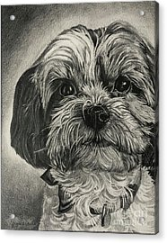 Puppers Acrylic Print