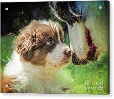 Puppy Dog Acrylic Print