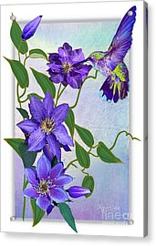 Purple Attraction Acrylic Print