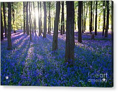 Purple Bluebell Woods In Early Morning Acrylic Print