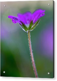 Acrylic Print featuring the photograph Purple Flower by John Rodrigues
