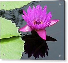 Purple Majesty Acrylic Print