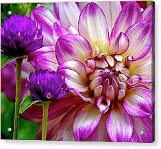 Purple Pals Acrylic Print