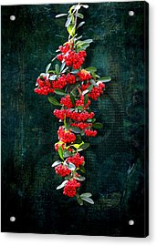 Pyracantha Berries - Do Not Eat Acrylic Print