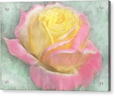 Queen Bella Rose -  I Care Acrylic Print