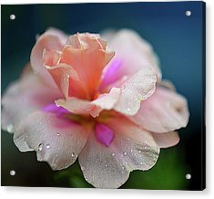 Pink Mist Acrylic Print