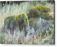Acrylic Print featuring the painting Rabbit Brush Study by Peter Mathios