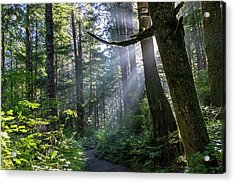Acrylic Print featuring the photograph Rain Forest At La Push by Ed Clark