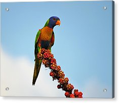 Rainbow Lorikeet Umbrella Tree Flowers Acrylic Print
