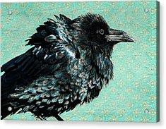 Raven Maven Acrylic Print