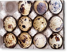 Raw Quail Eggs In Egg Holder From Above Acrylic Print