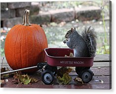 Ready To Ride My Little Red Wagon Acrylic Print