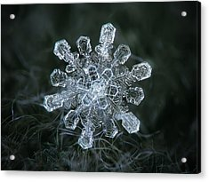 Acrylic Print featuring the photograph Real Snowflake - 04-feb-2018 - 1 by Alexey Kljatov