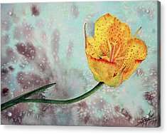 Reclining Mariposa Lily Acrylic Print by Robin Street-Morris