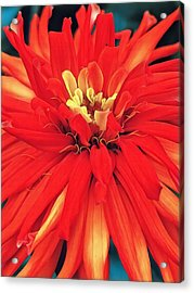 Red Bliss Acrylic Print