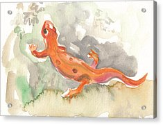 Red Eft Acrylic Print