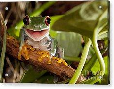 Red-eyed Tree Frog Smile Acrylic Print