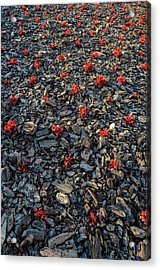 Red Flowers Over Stones Acrylic Print