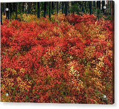 Red Forest Light Acrylic Print by Leland D Howard