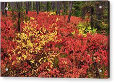 Red Forest Panoramic Acrylic Print by Leland D Howard