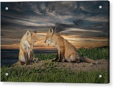 Acrylic Print featuring the photograph Red Fox Kits - Past Curfew by Patti Deters