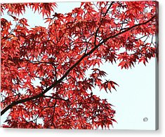 Acrylic Print featuring the photograph Red Japanese Maple Leaves by Debi Dalio