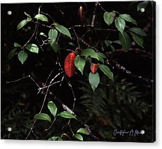 Acrylic Print featuring the digital art Red Leaf by Christopher Meade