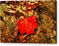 Red Leaf On Mossy Rock Acrylic Print