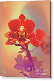 Acrylic Print featuring the mixed media Red Orchid  by Rachel Hannah