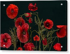 Red Poppies On Black Acrylic Print