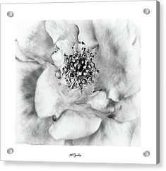 Acrylic Print featuring the photograph Red Rose Flower Details by Michalakis Ppalis